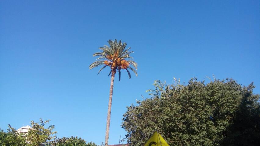Típica imagen de Alicante: cielo azul y palmeras.