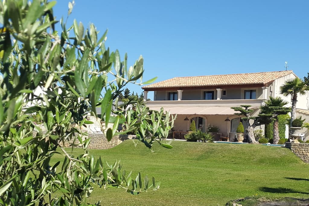 The Olive Tree, the heart and soul of Provence.