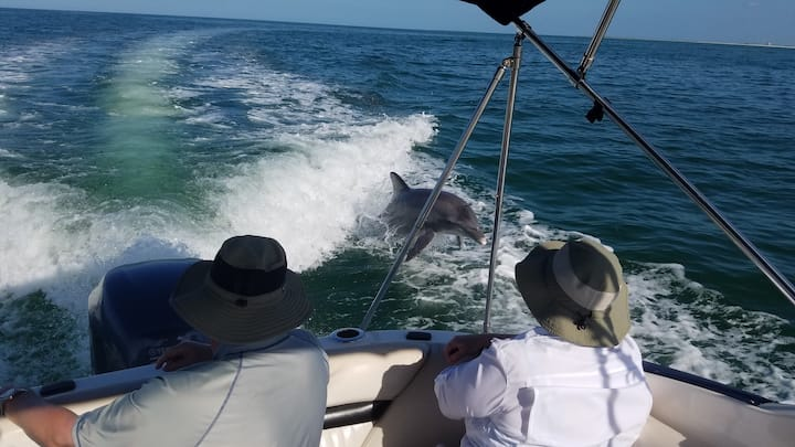 Everyone loves to see the dolphins jump!
