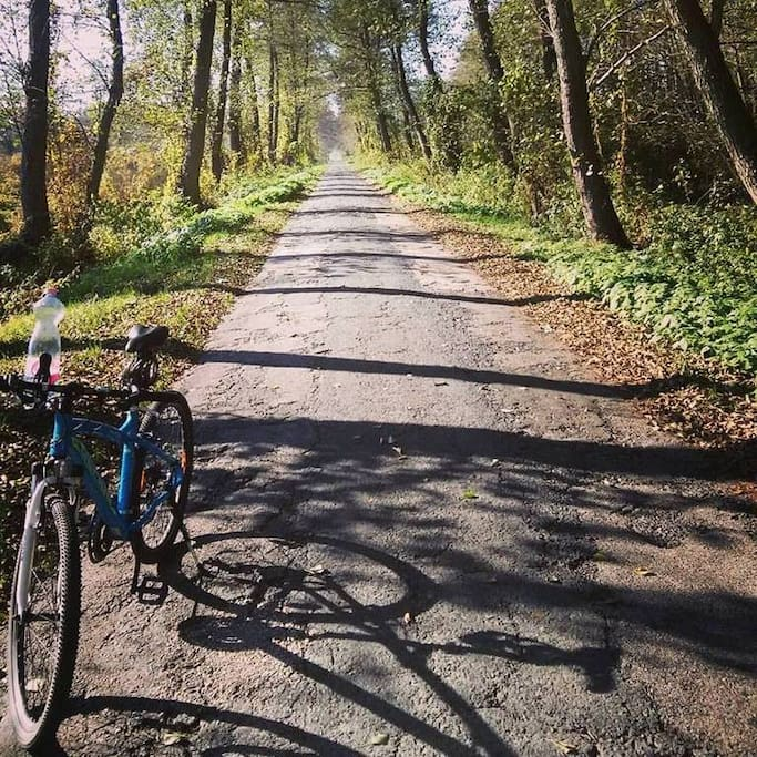 Cycling in the natural landscape park around