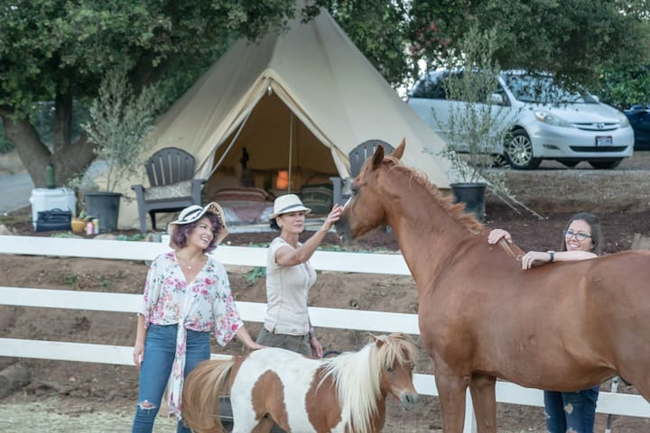 Animal Lover's camping on a scenic ranch.