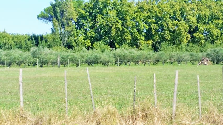 Une Bastide en Provence - Maillane - Casa