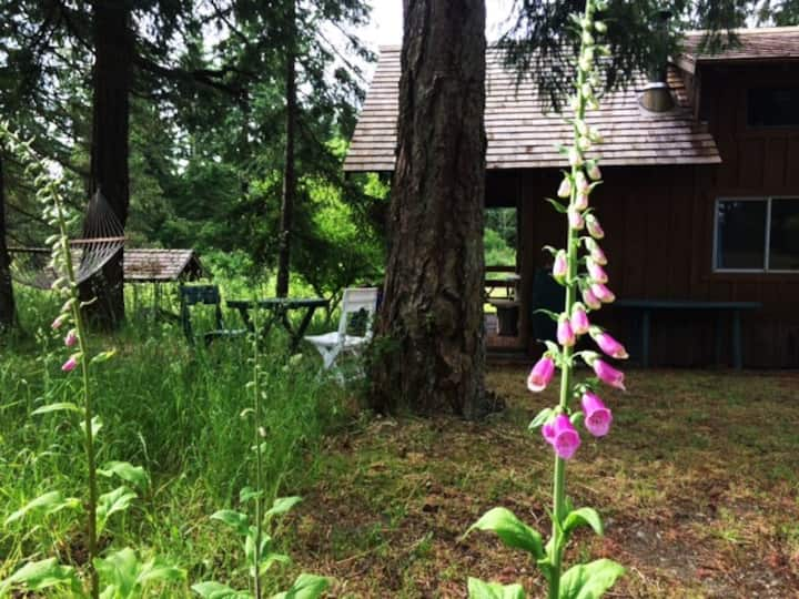 Rustic cabin at old growth forest trail to ocean