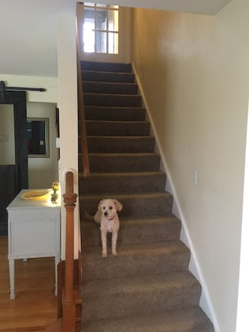 Stairway up to your loft with French door for added privacy (don't mind potter boy!)