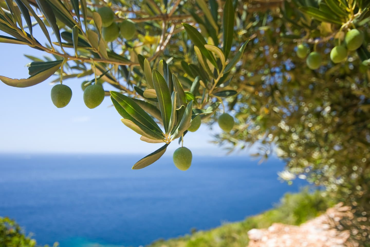 In the rolling hills full of olive and fruit trees, our villa is a quiet nature sanctuary.