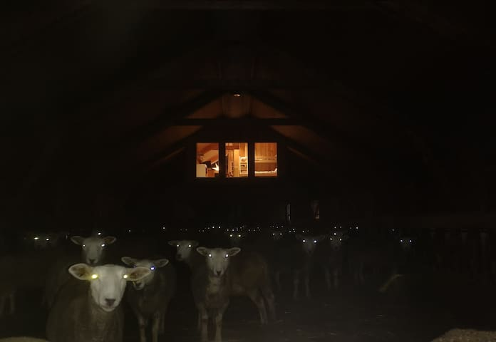 Unique apartment innside sheep barn in Norway