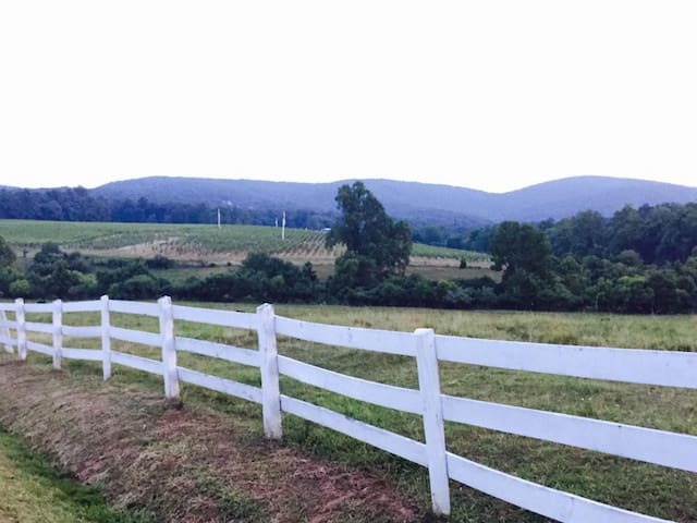 Vineyard Country Guesthouse - Barboursville - House
