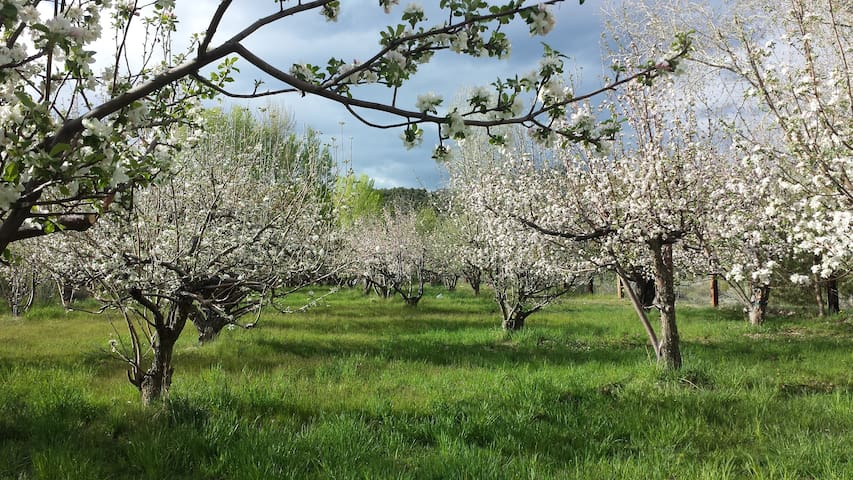 Amelia's Orchard- Taos, New Mexico