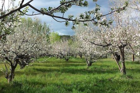 Amelia's Orchard - Valdez - Rumah