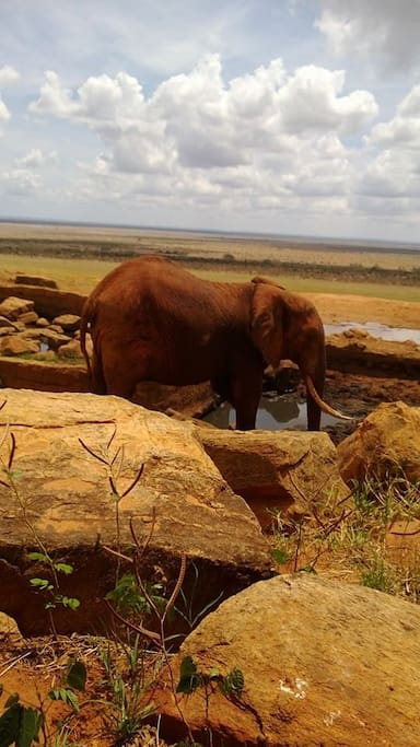 The elephants you will get to see in Tsavo.