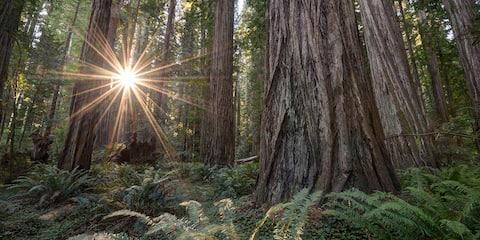 Cozy & Quiet Rio Dell Redwood Retreat