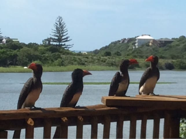 Hornbills paying a visit!