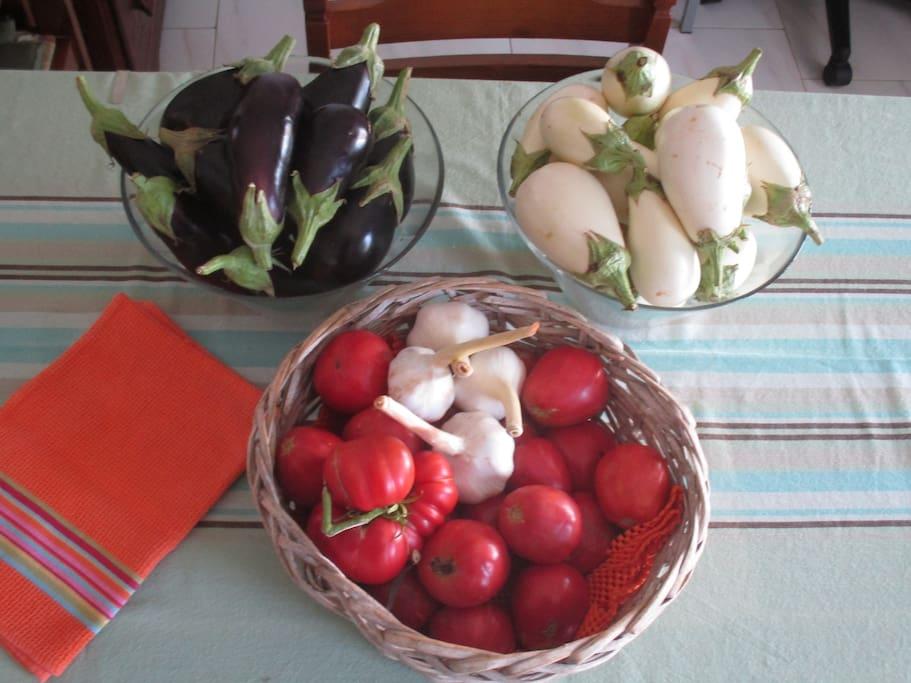 bakłażany i pomidory - ekologiczne i przepyszne