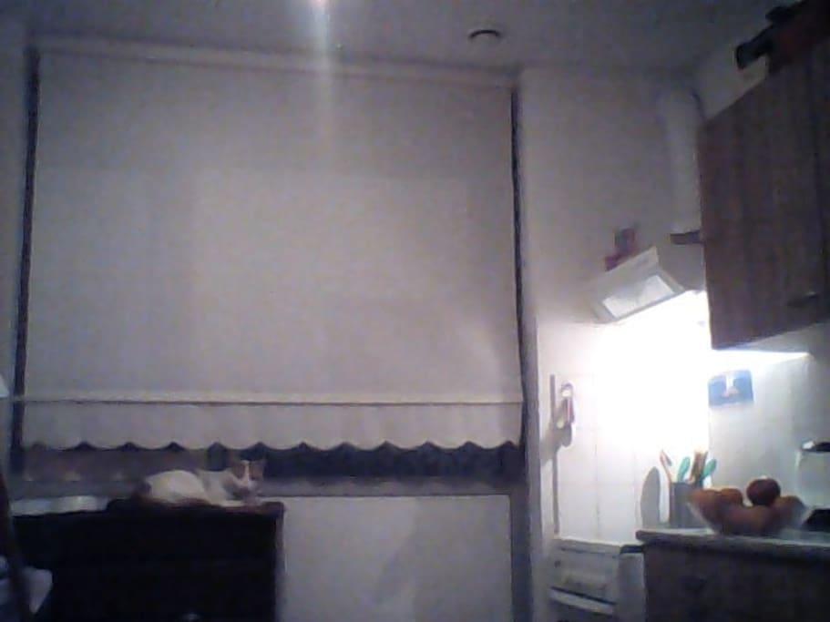 Quiet Kitchen with cat in the night