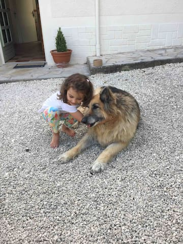 One of our adorable little guests giving Maisy our dog a goodbye cuddle.