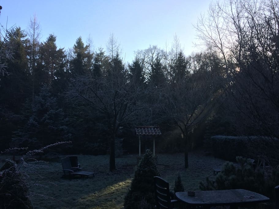 De tuin in de winter / the garden during winter