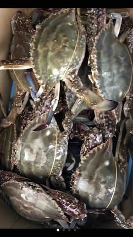 透鲜的大螃蟹