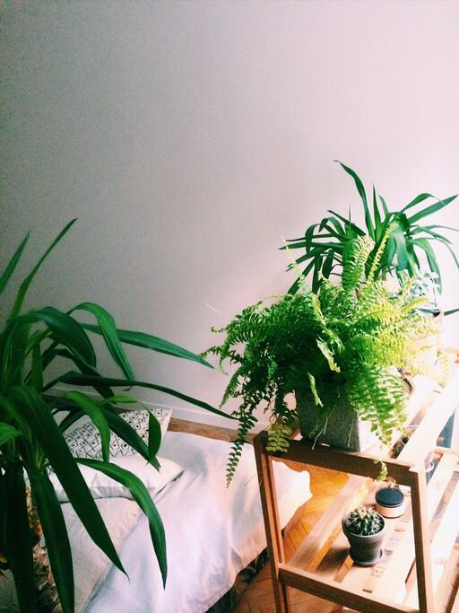A lot of plants for better dreams