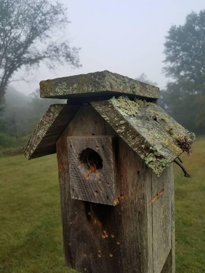 """Thoughtful  Nest"""