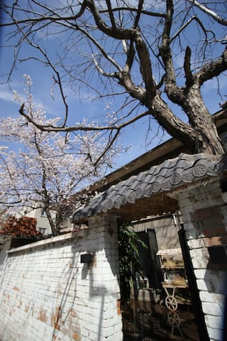 【大隐-三和一宅】近海鲜居/护城河畔/两棵树咖啡小院/摄影青年打卡之地/