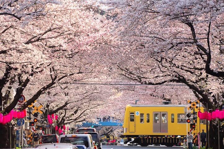 新宿附近超人气住宅#交通便利 - 中野区