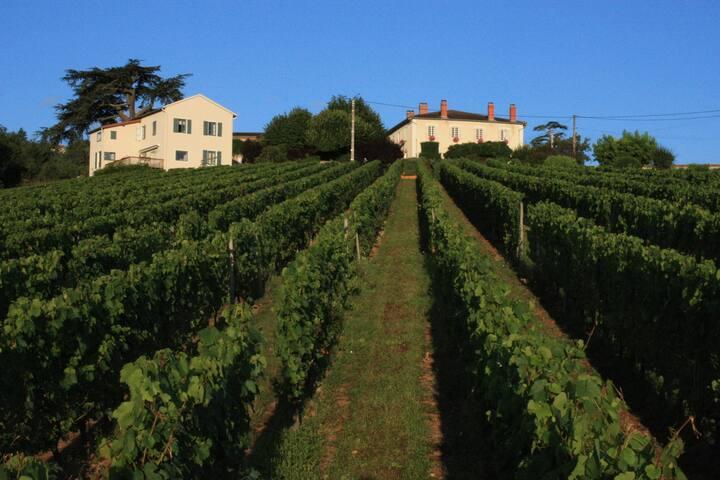 Belle maison au calme dans les vignes.