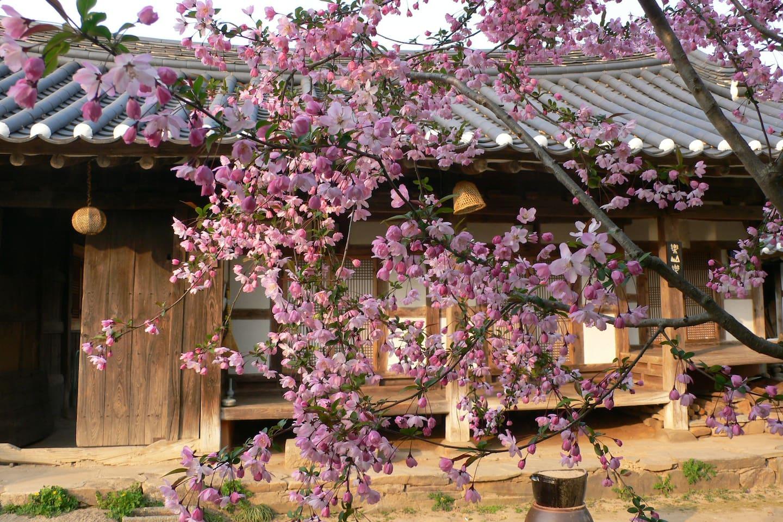 사랑채와 중문 그리고 사과나무