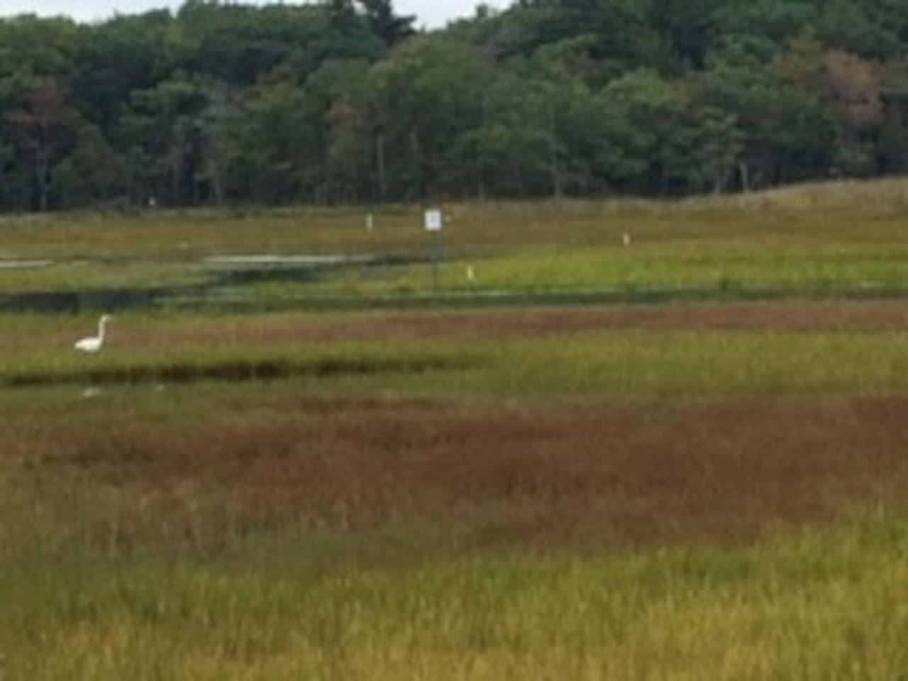 Your view from the front sitting area of the green marsh with a white egret