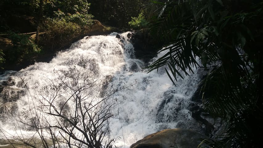 Explore Waterfall within estate - Madikeri