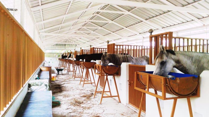 Stallions Valley Horse Riding Academy - Thrissur - Huis