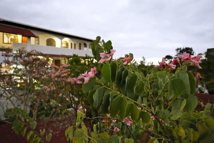 The Galapagos Pearl Hotel