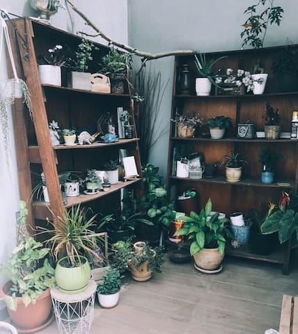 Green room in the North Tel Aviv