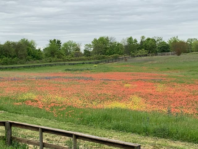 Springtime brings lots of wildflowers just outside the door.  This is the view from the balcony Spring 2019.