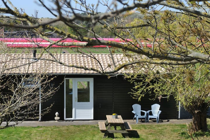 Chalet with unique view over the dunes from Egmond