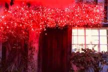 Winter berry lights outside
