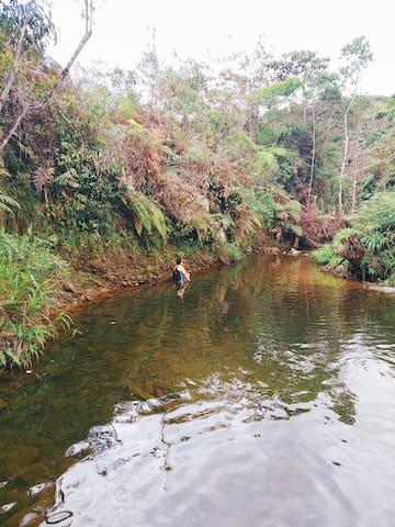 Paraíso amazónico