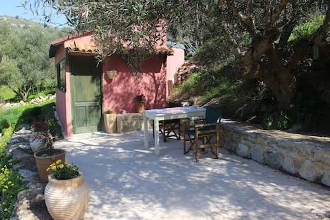Olive tree house in organic orgonfarm.