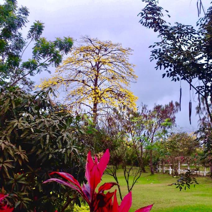 Naturaleza típica y especial de nuestro país Ecuador