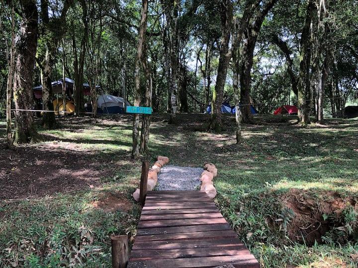 Camping Trailer Motorhome Estância Casa na Árvore