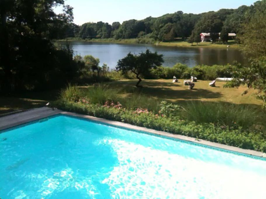Waterfront Pool (Optionally Heated) with Pond, Swan, etc.!