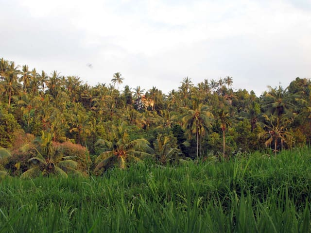 View from rice field