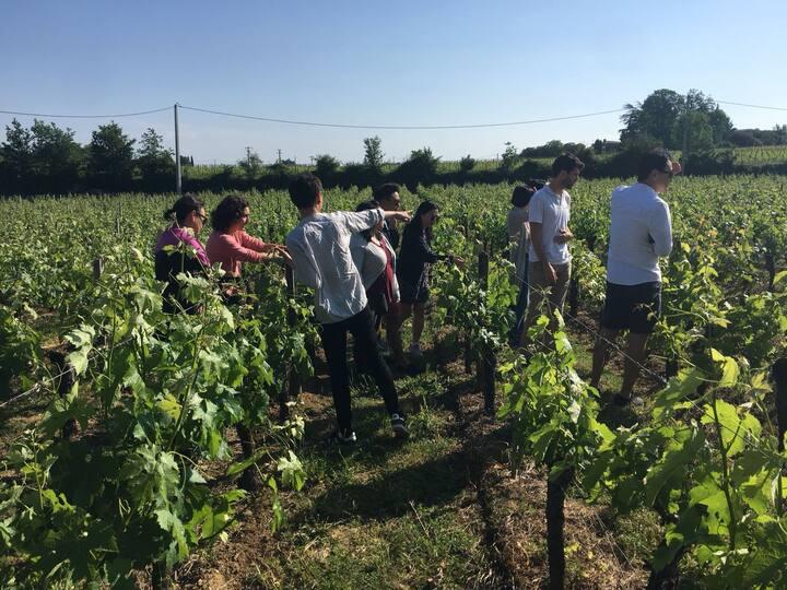 Ballade dans les vignes