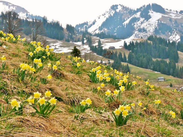 St Hilaire and Dent de Crolles in the spring