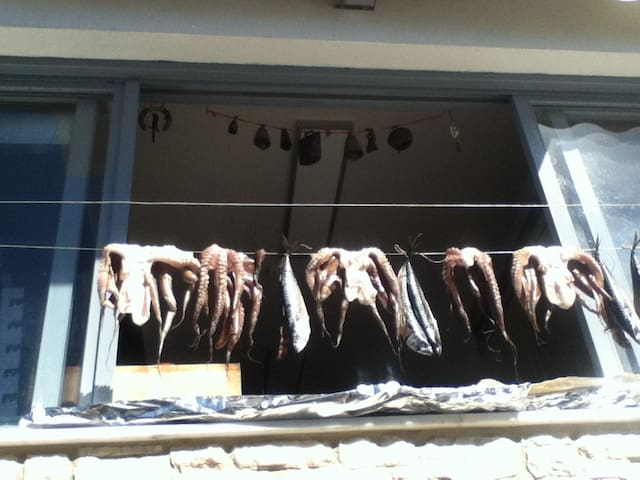 Octopus drying in the sun!