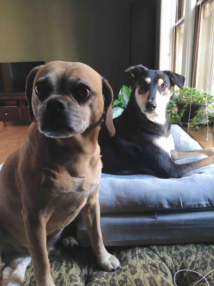dog friendly sanctuary