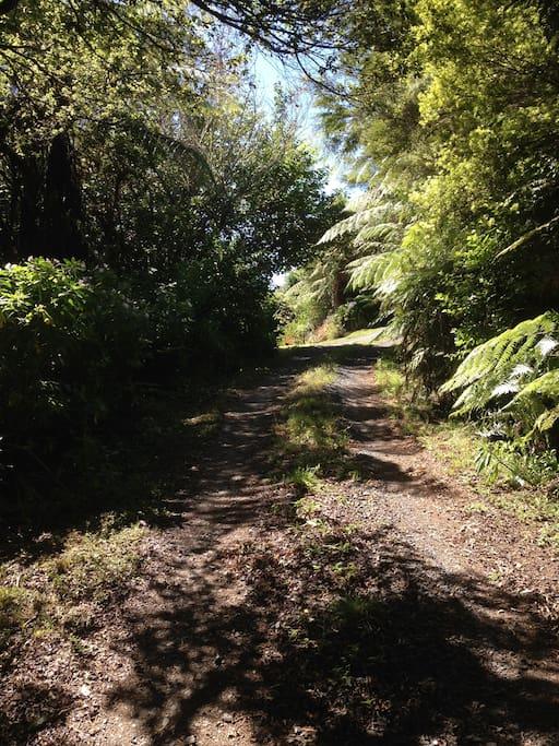 fern covered driveway