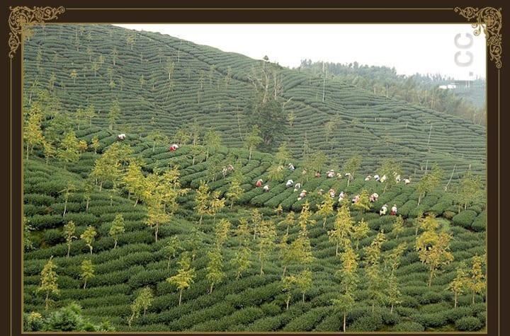 虹月精緻家庭六人套房 近麒麟潭,溪頭妖怪村,茶與竹的故鄉鹿谷,占地千坪的園區,提供無毒蔬食早餐