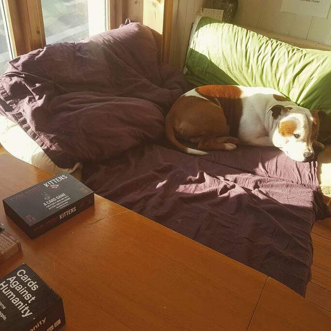 Our hostel dog Burger