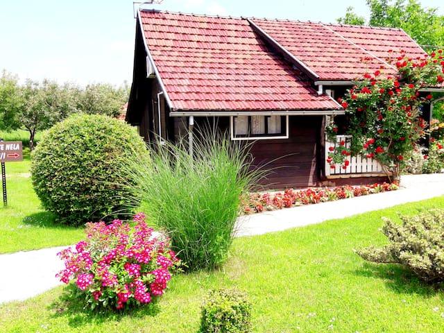 House Nela