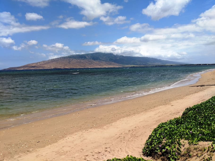View of Maui Mnts.